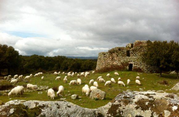 Schaf & Co: Landwirtschaftliche Fachreise zu einer antiken Hirtenkultur