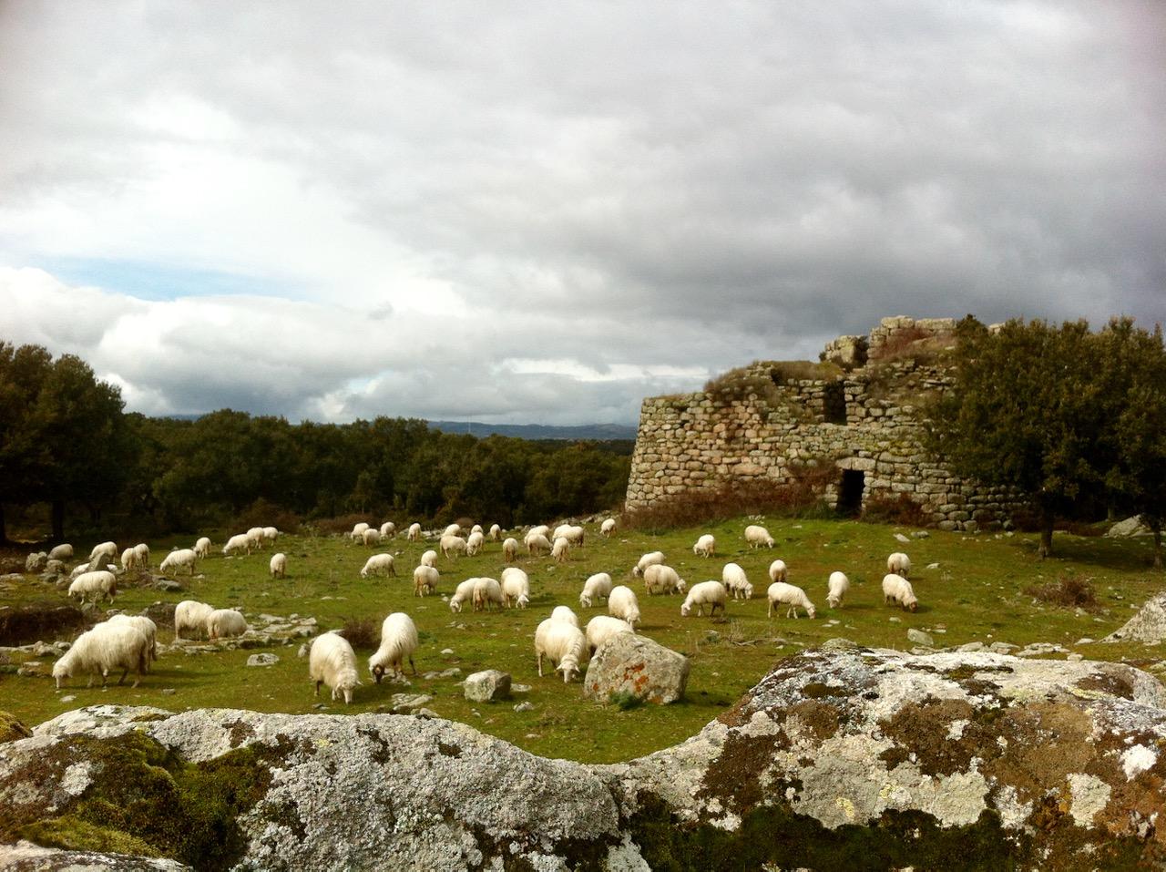 Antike Hirtenkultur auf Sardinien