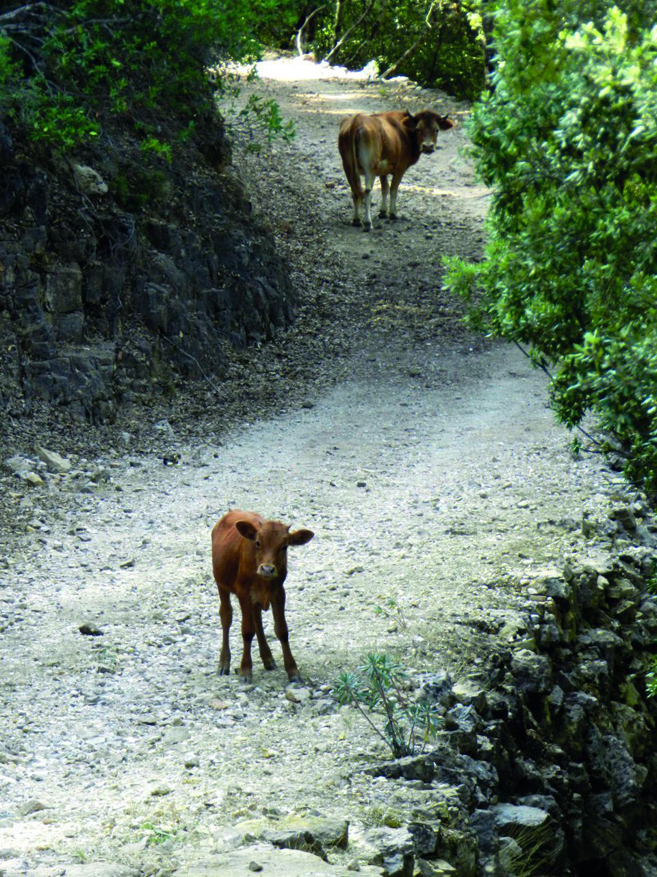 Frei laufende Tiere stellen manche Teams vor eine Spontan-Aufgabe :)