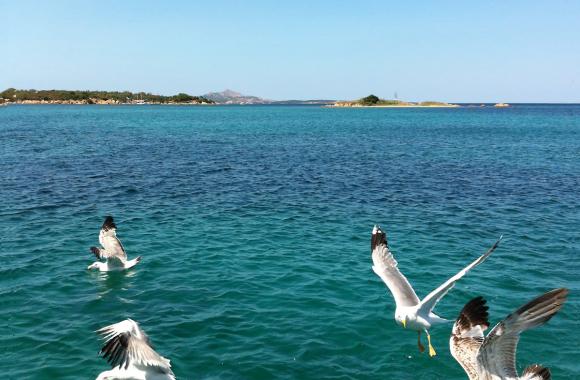 Mehr Spaß im Projektteam: Team-Event auf Sardinien