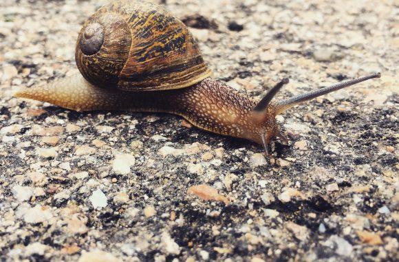 Slow Business, oder: Wie Sardinien dein Arbeitsleben entschleunigt und bereichert