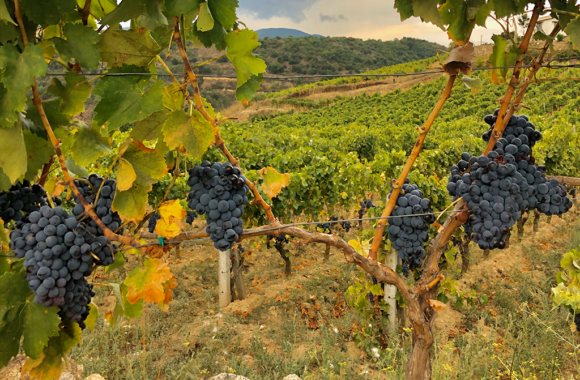 Weinreise Sardinien für Sommeliers und Kenner: Cannonau, Carignano & Co.